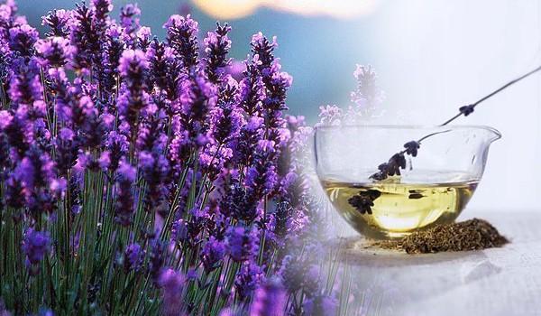 Obtinere Hidrosoli, Apa Florala, Uleiuri Esentiale prin Distilare
